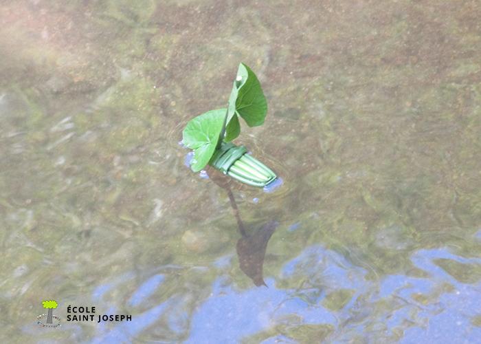 Sortie nature à Quévert.